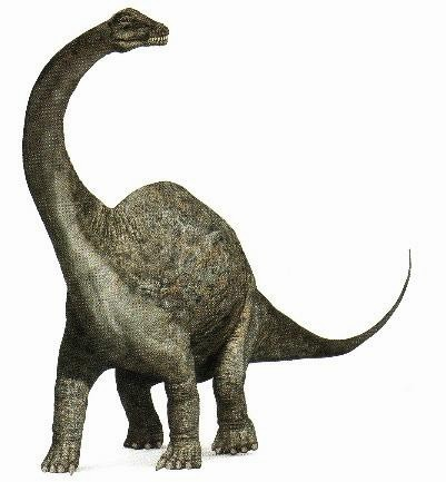 ApatosaurusPicture.jpg