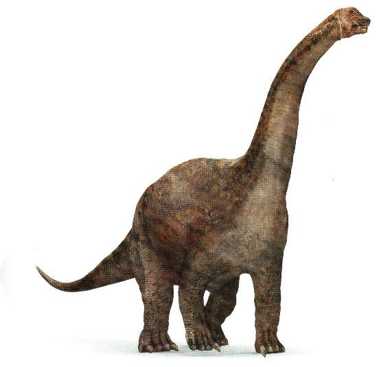BarapasaurusPicture.jpg