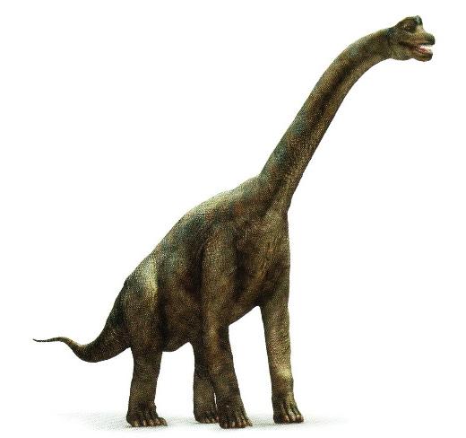 BrachiosaurusPicture.jpg