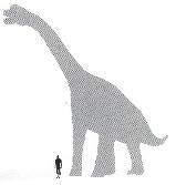 BrachiosaurusSize.JPG