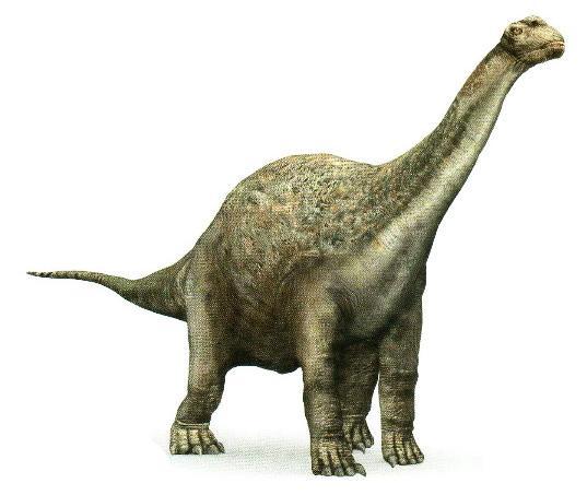 CamarasaurusP.jpg