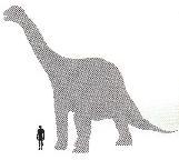 CamarasaurusSize.JPG