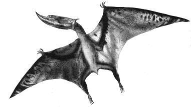 DsungaripterusP.JPG