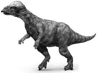 PachycephalosaurusP.JPG