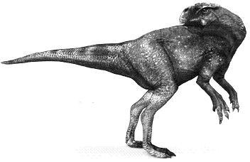 PsittacosaurusP.JPG