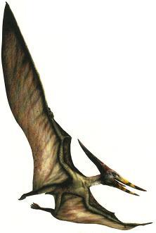 Pteranodon2P.JPG