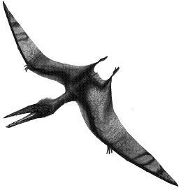 PterodactylusP.JPG