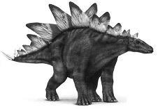 StegosaurusP.JPG