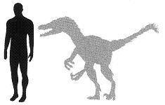 Velociraptor2.JPG